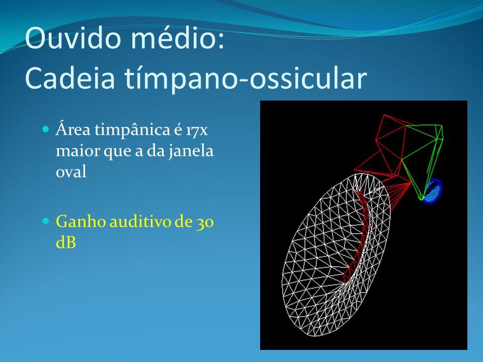 Ouvido médio: Cadeia tímpano-ossicular Área timpânica é 17x maior que a da janela oval Ganho auditivo de 30 dB