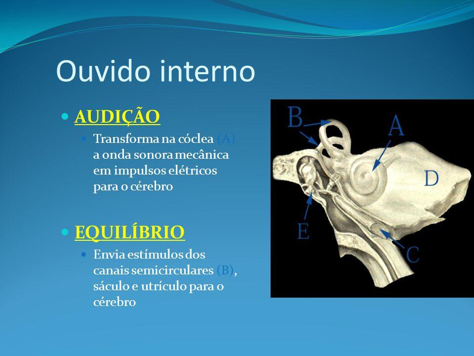 Ouvido interno AUDIÇÃO Transforma na cóclea (A) a onda sonora mecânica em impulsos elétricos para o cérebro EQUILÍBRIO Envia estímulos dos canais semi