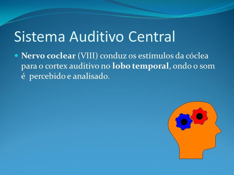 Sistema Auditivo Central Nervo coclear (VIII) conduz os estímulos da cóclea para o cortex auditivo no lobo temporal, ondo o som é percebido e analisad