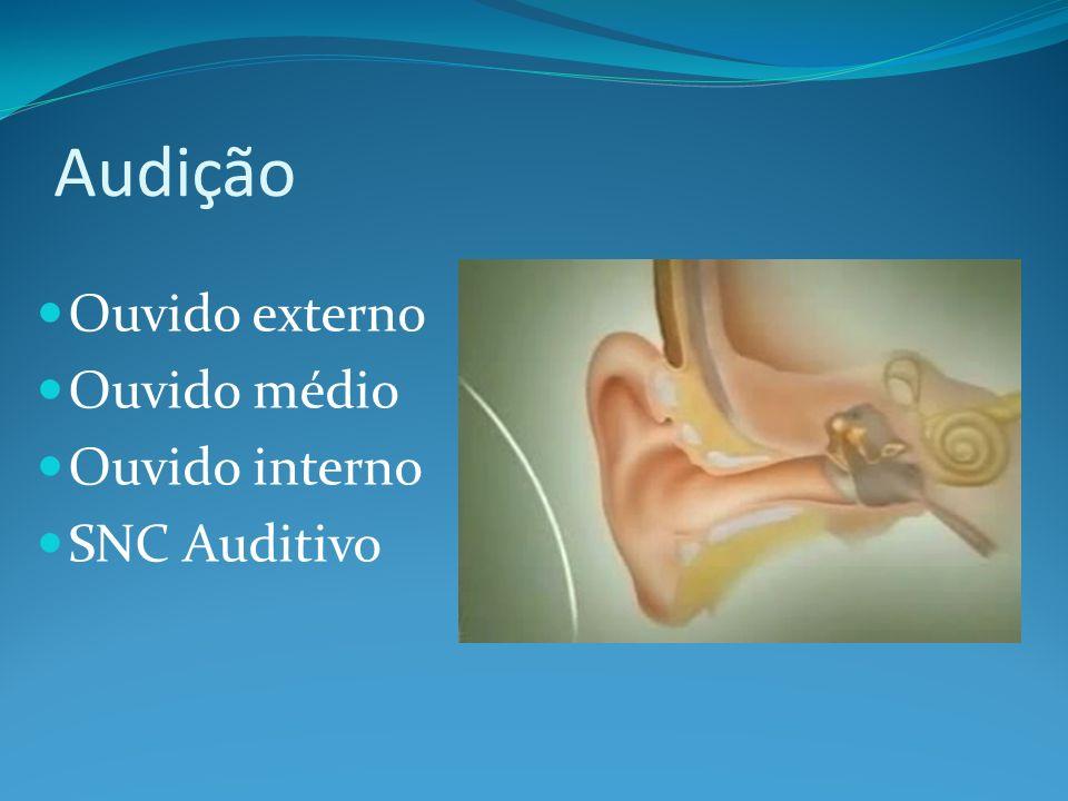 Orelha Capta o som Localização do som Ganho auditivo de 5dB Proteção Outra utilidade?