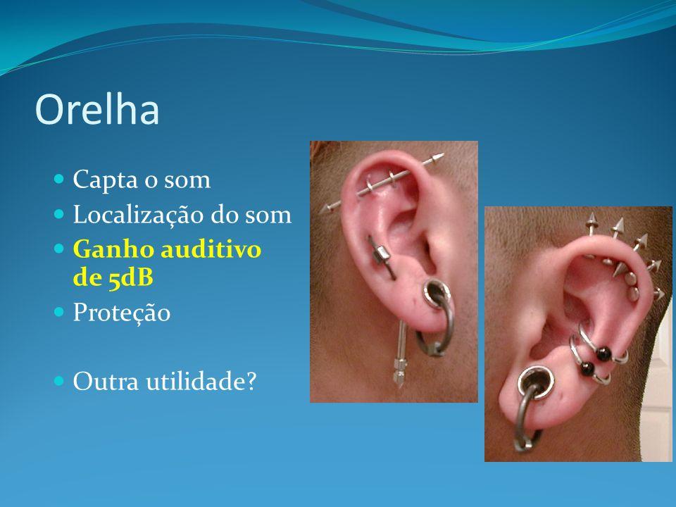 Conduto Auditivo Externo 26mm de comprimento por 7mm de diâmetro; forma S Revestido com glândulas ceruminosas (1/3 externo) Protege o tímpano Aumenta a pressão sonora devido a resonância acústica (ganho auditivo de 10dB)