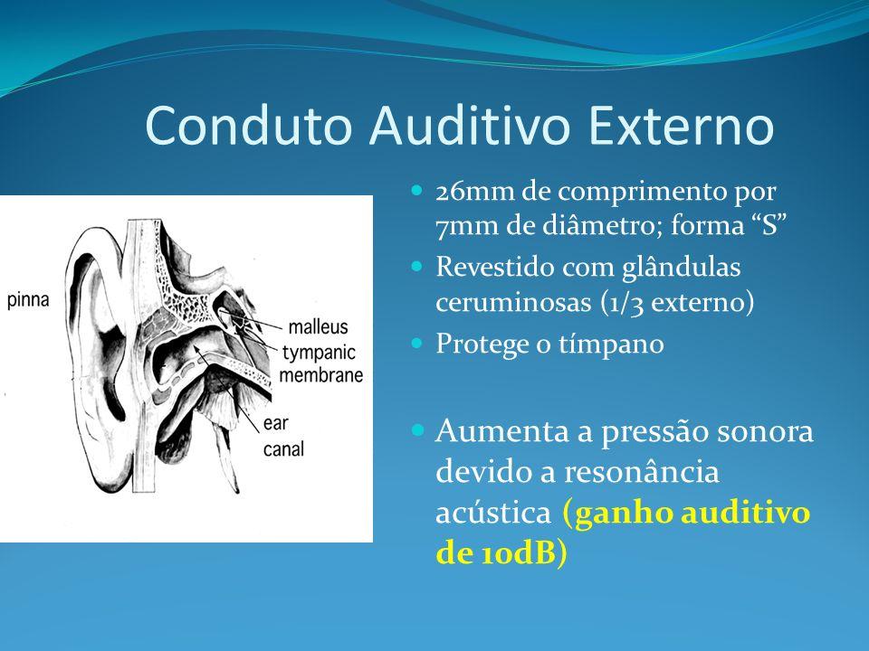 Conduto Auditivo Externo 26mm de comprimento por 7mm de diâmetro; forma S Revestido com glândulas ceruminosas (1/3 externo) Protege o tímpano Aumenta