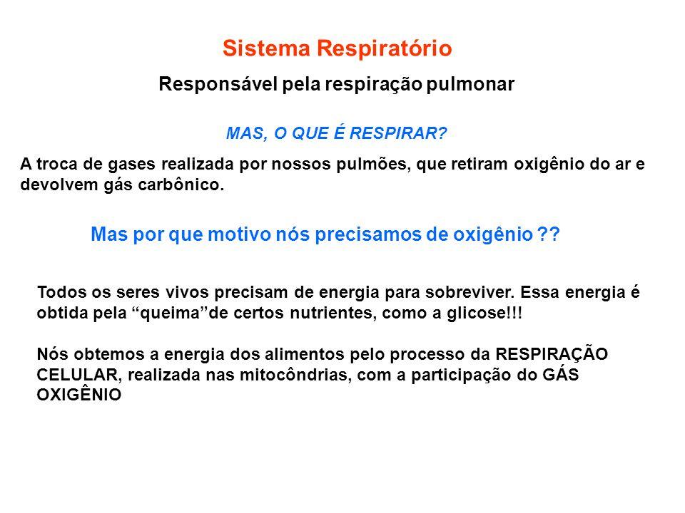 Responsável pela respiração pulmonar MAS, O QUE É RESPIRAR? A troca de gases realizada por nossos pulmões, que retiram oxigênio do ar e devolvem gás c