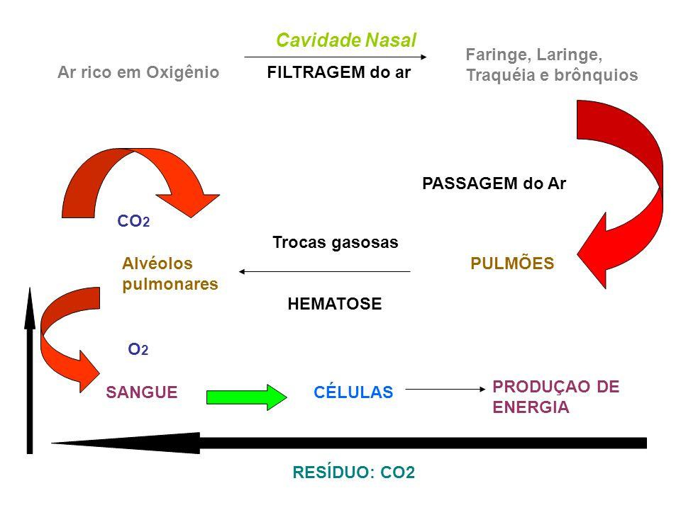 Cavidade Nasal Ar rico em Oxigênio FILTRAGEM do ar Faringe, Laringe, Traquéia e brônquios PASSAGEM do Ar PULMÕESAlvéolos pulmonares Trocas gasosas HEM