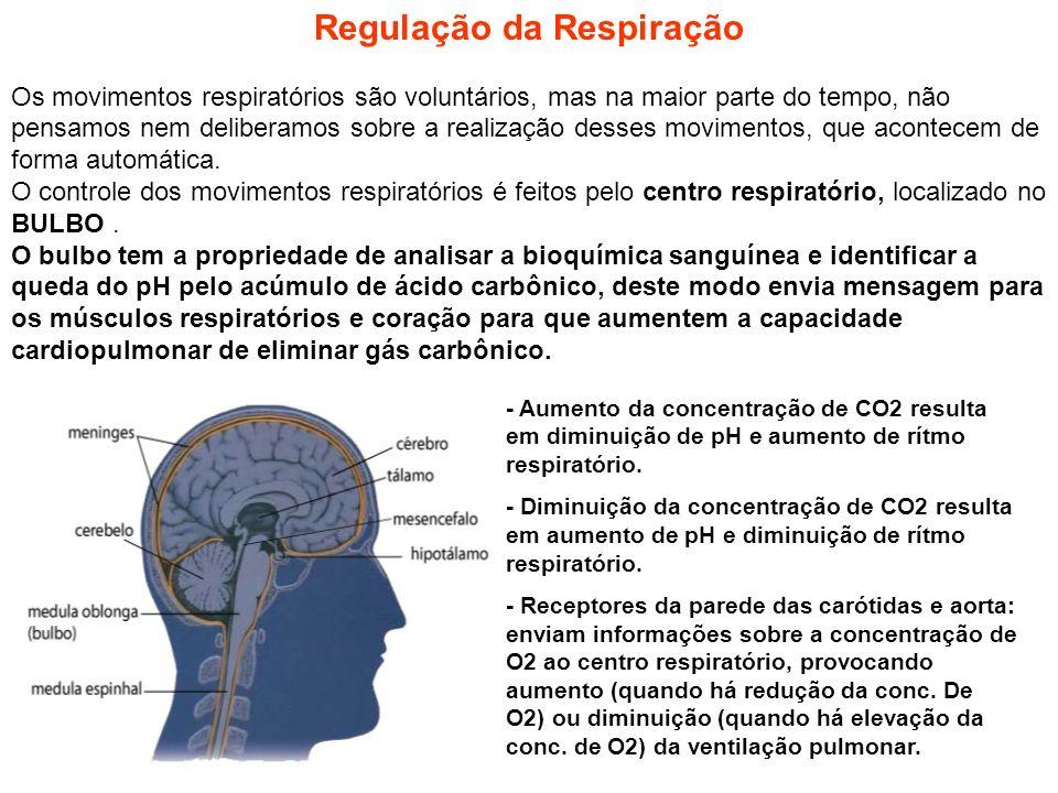 Regulação da Respiração Os movimentos respiratórios são voluntários, mas na maior parte do tempo, não pensamos nem deliberamos sobre a realização dess