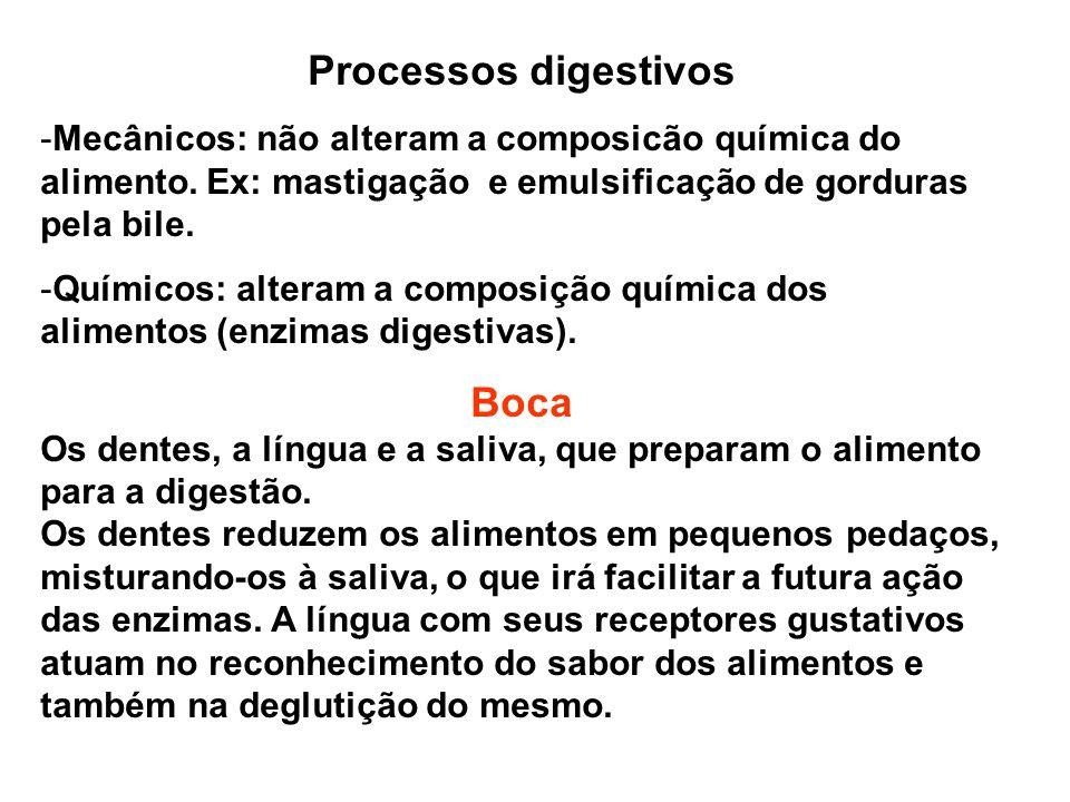 Processos digestivos -Mecânicos: não alteram a composicão química do alimento. Ex: mastigação e emulsificação de gorduras pela bile. -Químicos: altera