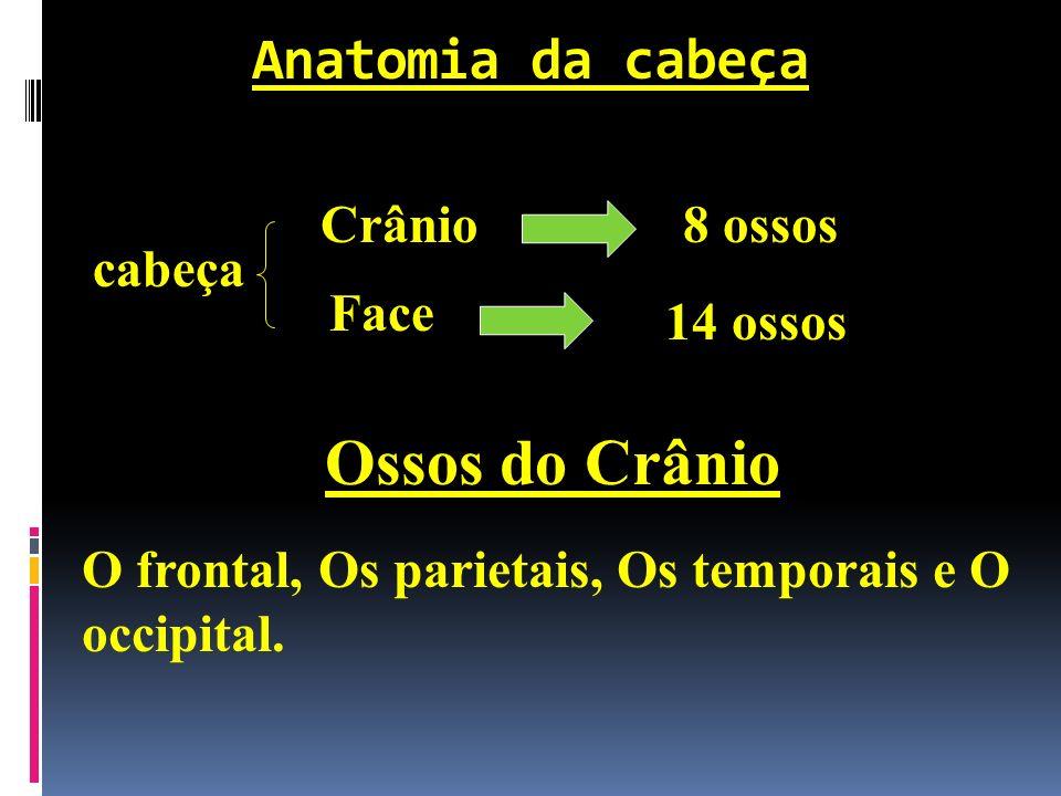 Anatomia da cabeça cabeça Crânio8 ossos Face 14 ossos Ossos do Crânio O frontal, Os parietais, Os temporais e O occipital.