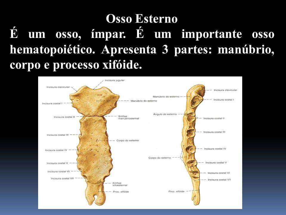 Osso Esterno É um osso, ímpar. É um importante osso hematopoiético. Apresenta 3 partes: manúbrio, corpo e processo xifóide.