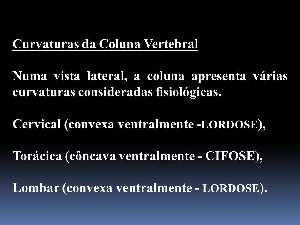 Curvaturas da Coluna Vertebral Numa vista lateral, a coluna apresenta várias curvaturas consideradas fisiológicas. Cervical (convexa ventralmente - LO