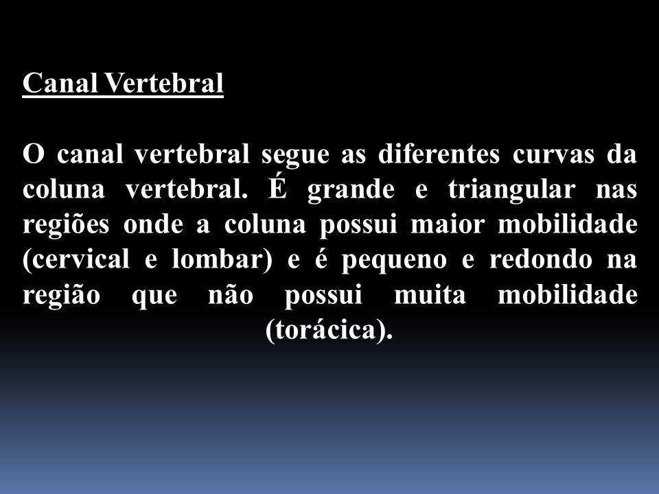 Canal Vertebral O canal vertebral segue as diferentes curvas da coluna vertebral. É grande e triangular nas regiões onde a coluna possui maior mobilid