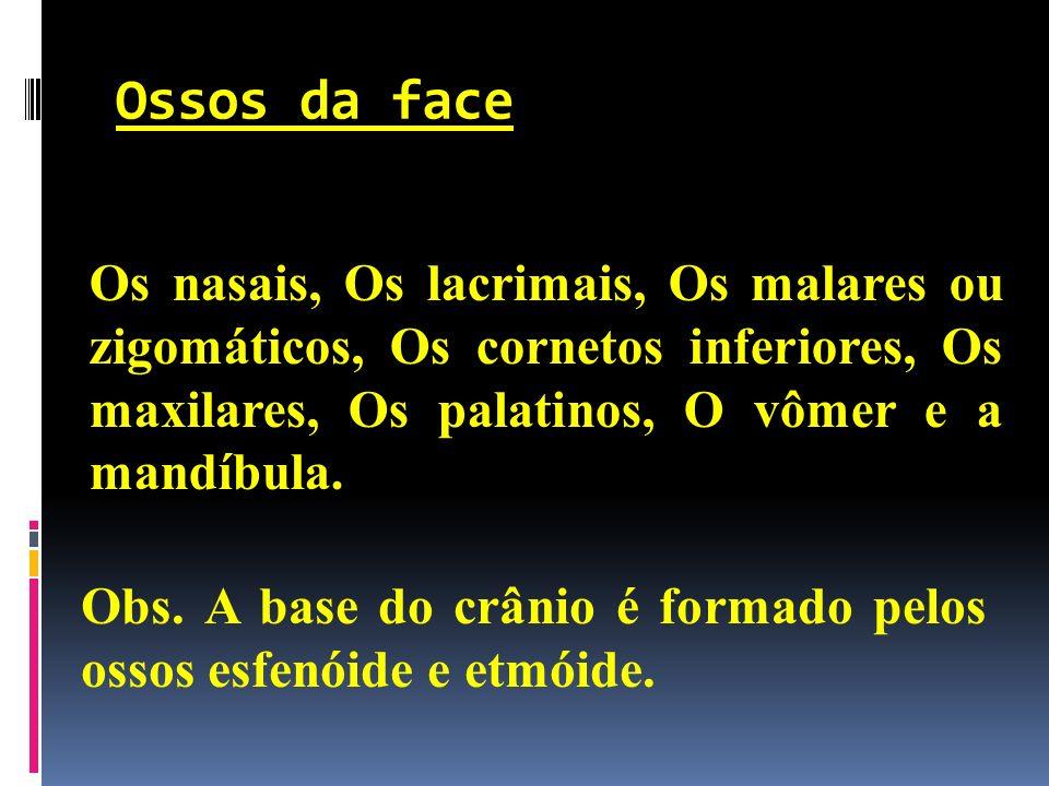 Ossos da face Os nasais, Os lacrimais, Os malares ou zigomáticos, Os cornetos inferiores, Os maxilares, Os palatinos, O vômer e a mandíbula. Obs. A ba