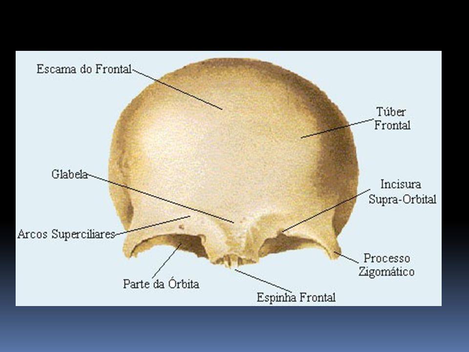 Canal Vertebral O canal vertebral segue as diferentes curvas da coluna vertebral.