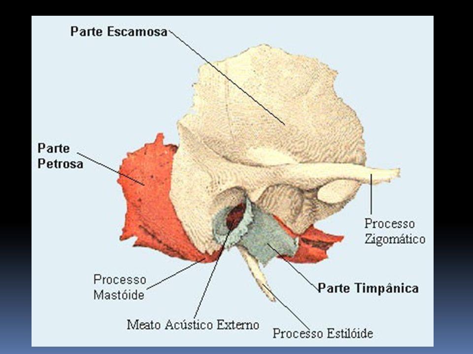 Vértebras cervicais atípicas São vértebras que não a presentão características da própria região C1 (Atlas) Primeira vértebra da região cervical, tem como características não possuir corpo e nem o processo espinhoso.