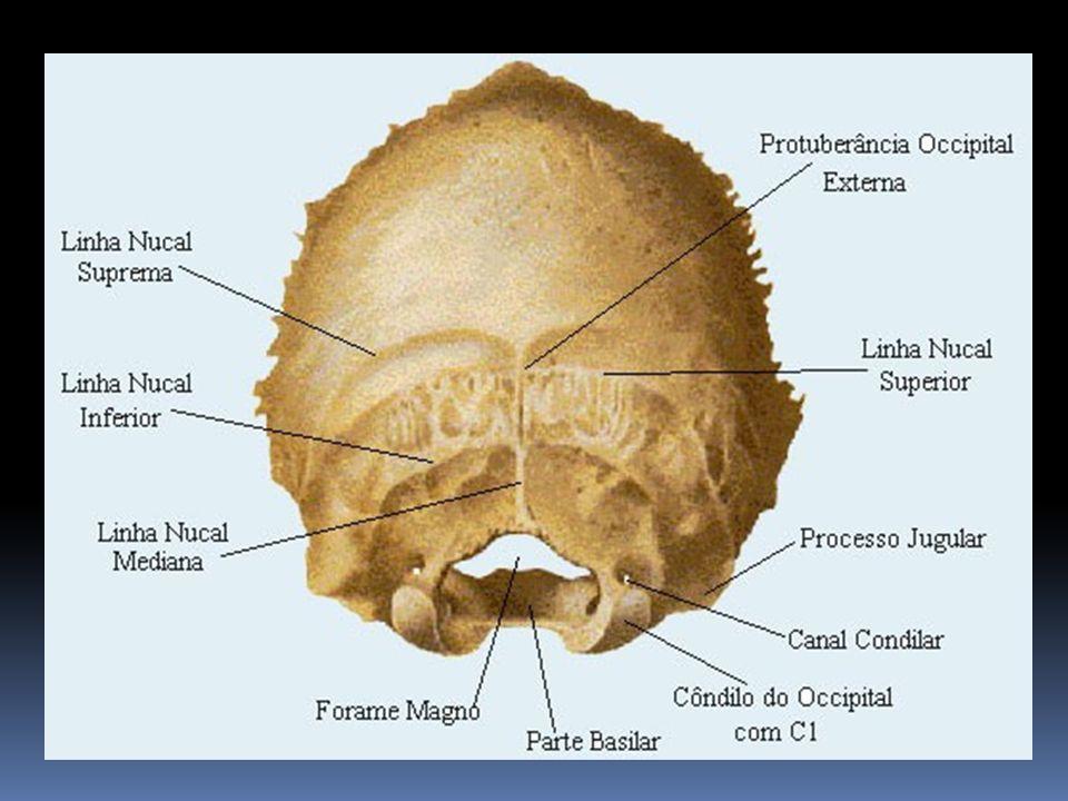 C2 (Áxis) Segunda vértebra cervical, tem como características o processo odontóide(dente) que forma o pseudo do corpo do Atlas.