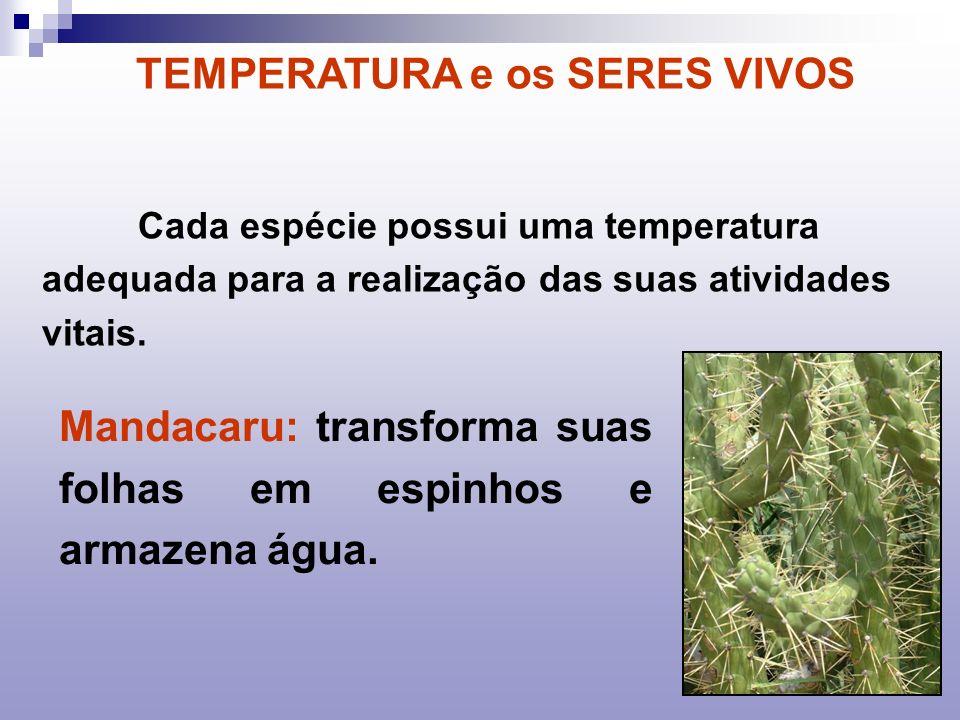 Cada espécie possui uma temperatura adequada para a realização das suas atividades vitais. Mandacaru: transforma suas folhas em espinhos e armazena ág