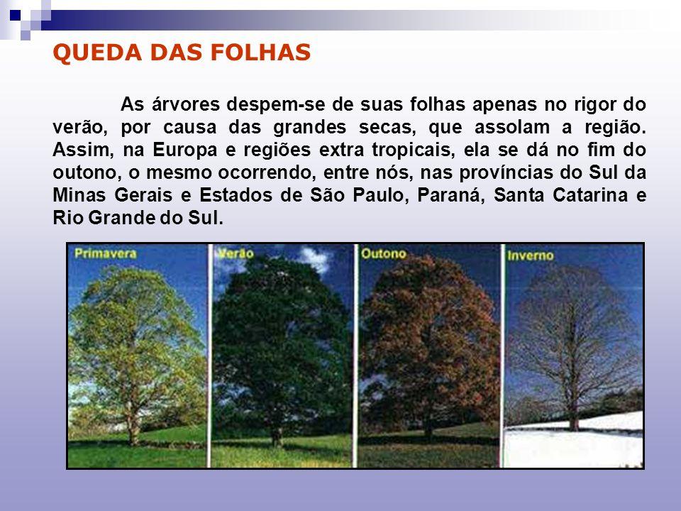 QUEDA DAS FOLHAS As árvores despem-se de suas folhas apenas no rigor do verão, por causa das grandes secas, que assolam a região. Assim, na Europa e r