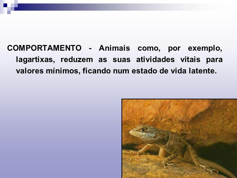 COMPORTAMENTO - Animais como, por exemplo, lagartixas, reduzem as suas atividades vitais para valores mínimos, ficando num estado de vida latente.