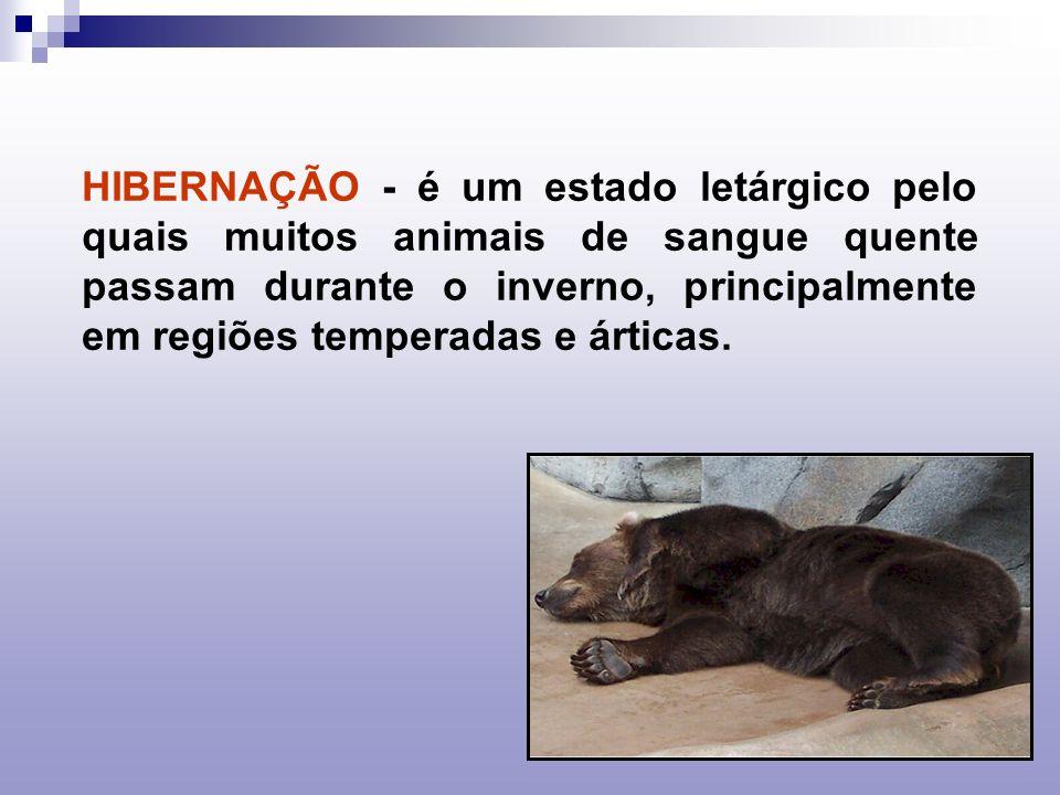 HIBERNAÇÃO - é um estado letárgico pelo quais muitos animais de sangue quente passam durante o inverno, principalmente em regiões temperadas e árticas