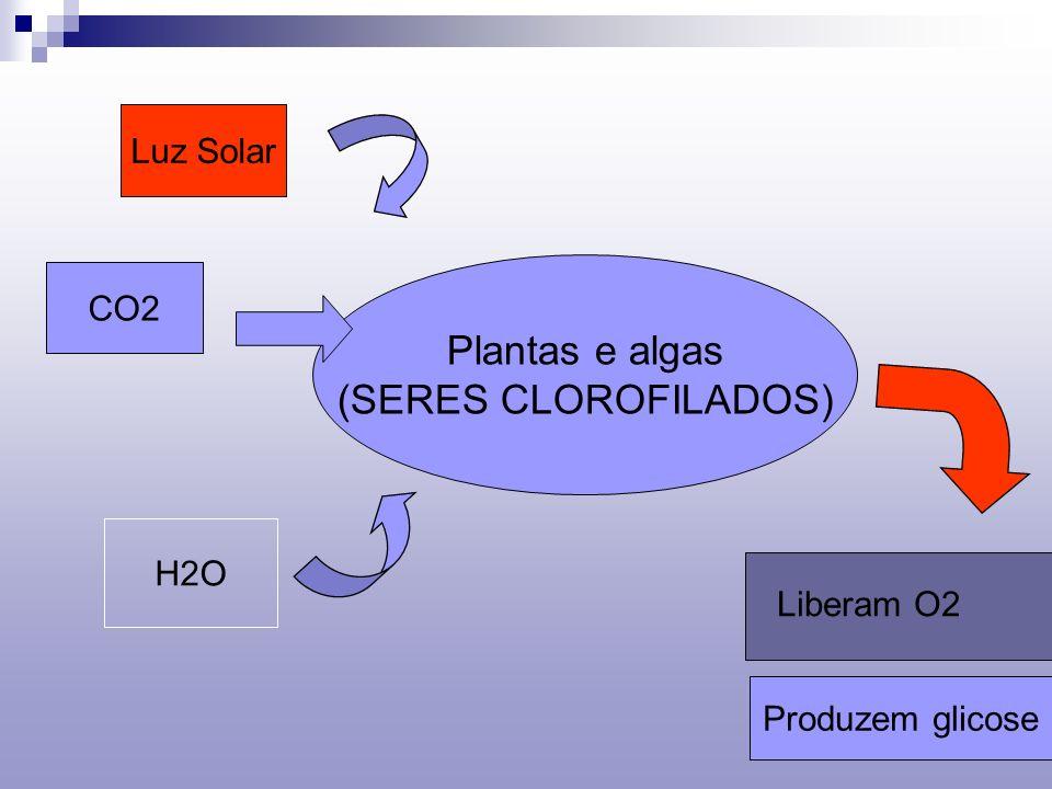 Plantas e algas (SERES CLOROFILADOS) H2O CO2 Luz Solar Liberam O2 Produzem glicose
