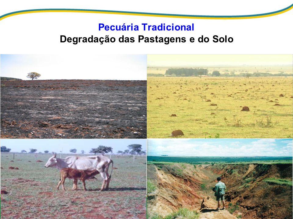 Pecuária Tradicional Degradação das Pastagens e do Solo