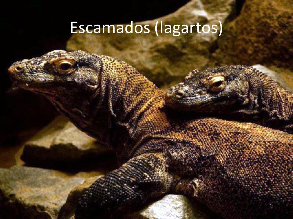 Escamados (lagartos)
