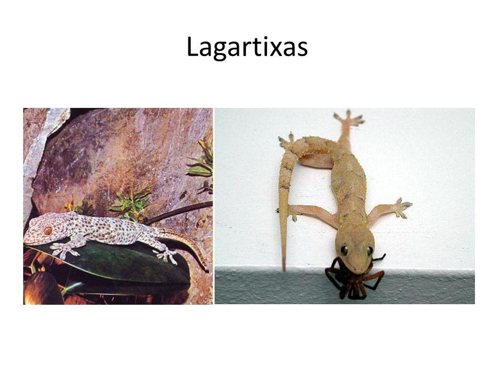 Lagartixas