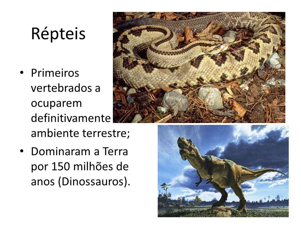 Primeiros vertebrados a ocuparem definitivamente o ambiente terrestre; Dominaram a Terra por 150 milhões de anos (Dinossauros).