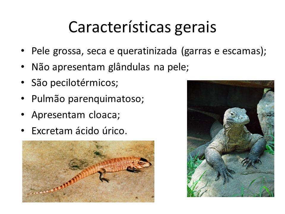 Classificação 7 mil espécies divididos em três ordens; Chelonia – apresentam carapaças.