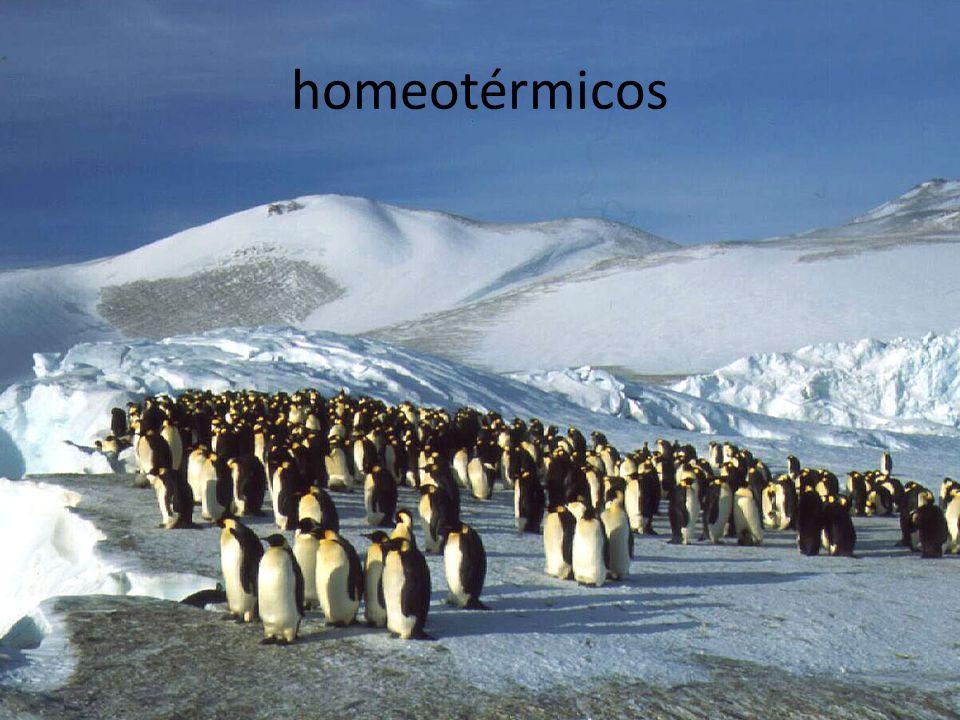homeotérmicos