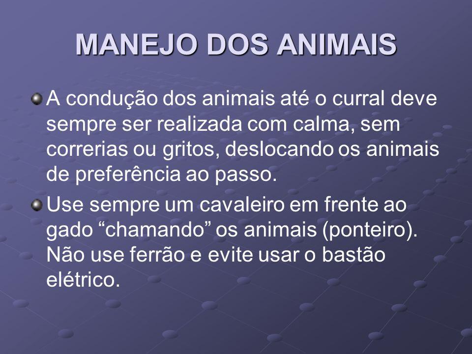 MANEJO DOS ANIMAIS A condução dos animais até o curral deve sempre ser realizada com calma, sem correrias ou gritos, deslocando os animais de preferên