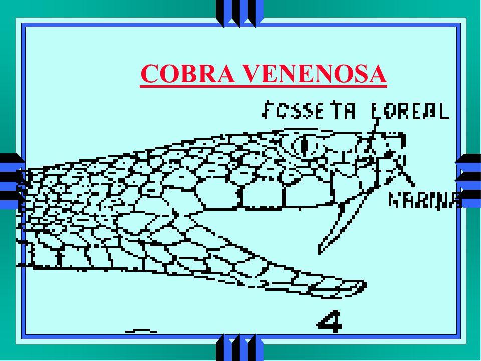 COBRA VENENOSA