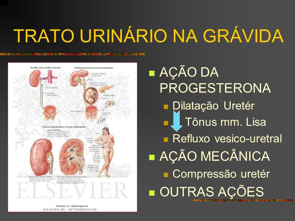 TRATO URINÁRIO NA GRÁVIDA AÇÃO DA PROGESTERONA Dilatação Uretér Tônus mm. Lisa Refluxo vesico-uretral AÇÃO MECÂNICA Compressão uretér OUTRAS AÇÕES