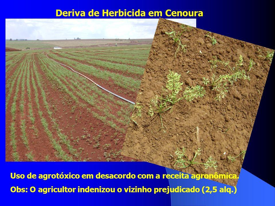 Deriva de Herbicida em Cenoura Uso de agrotóxico em desacordo com a receita agronômica. Obs: O agricultor indenizou o vizinho prejudicado (2,5 alq.)
