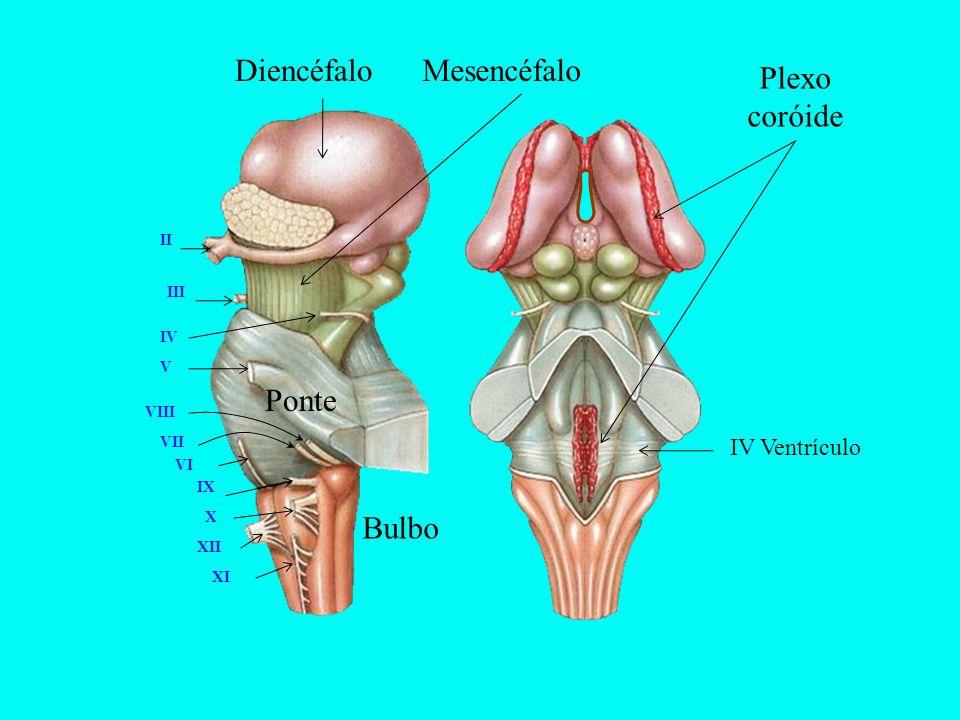 DiencéfaloMesencéfalo Ponte Bulbo Plexo coróide II III V VI IV VIII VII IX X XII XI IV Ventrículo