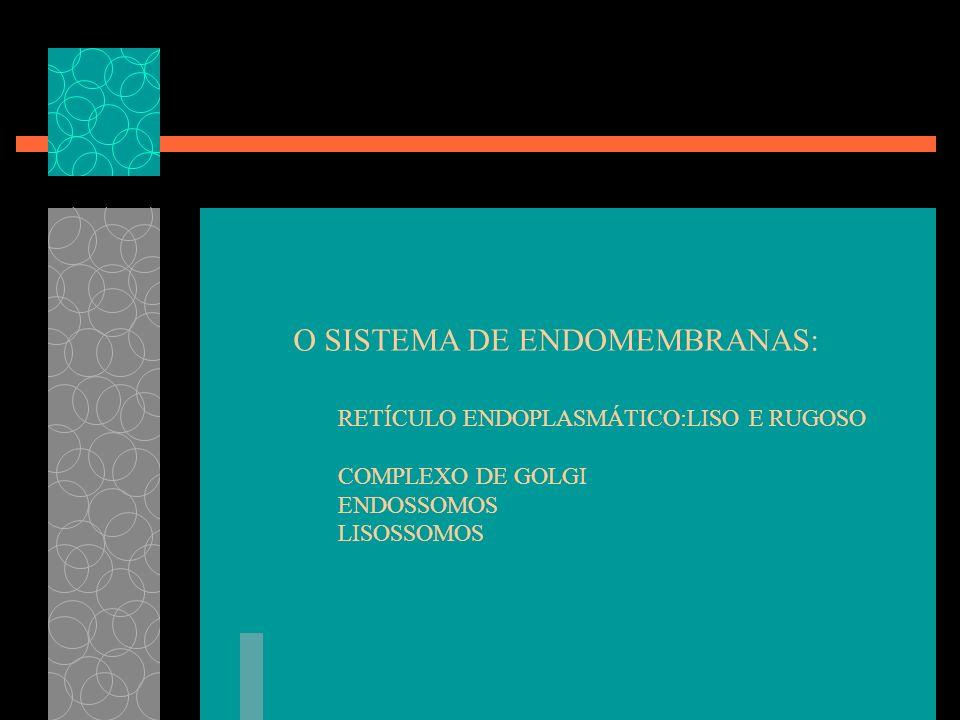 O SISTEMA DE ENDOMEMBRANAS: RETÍCULO ENDOPLASMÁTICO:LISO E RUGOSO COMPLEXO DE GOLGI ENDOSSOMOS LISOSSOMOS