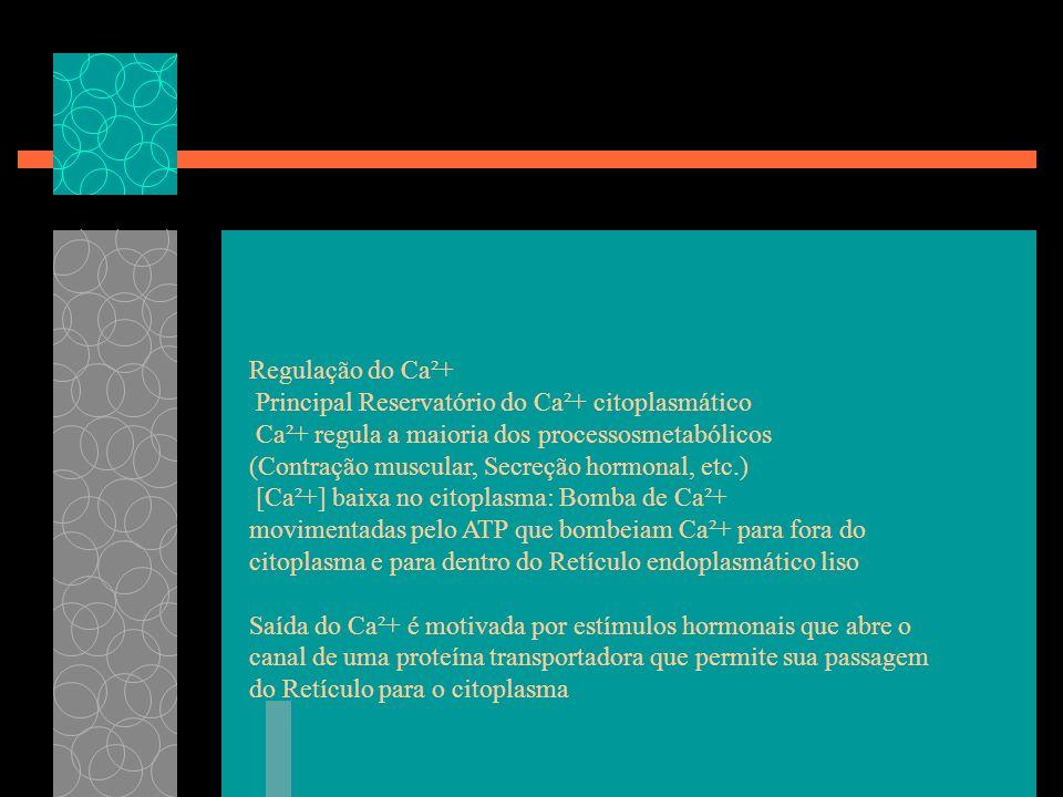 Regulação do Ca²+ Principal Reservatório do Ca²+ citoplasmático Ca²+ regula a maioria dos processosmetabólicos (Contração muscular, Secreção hormonal,