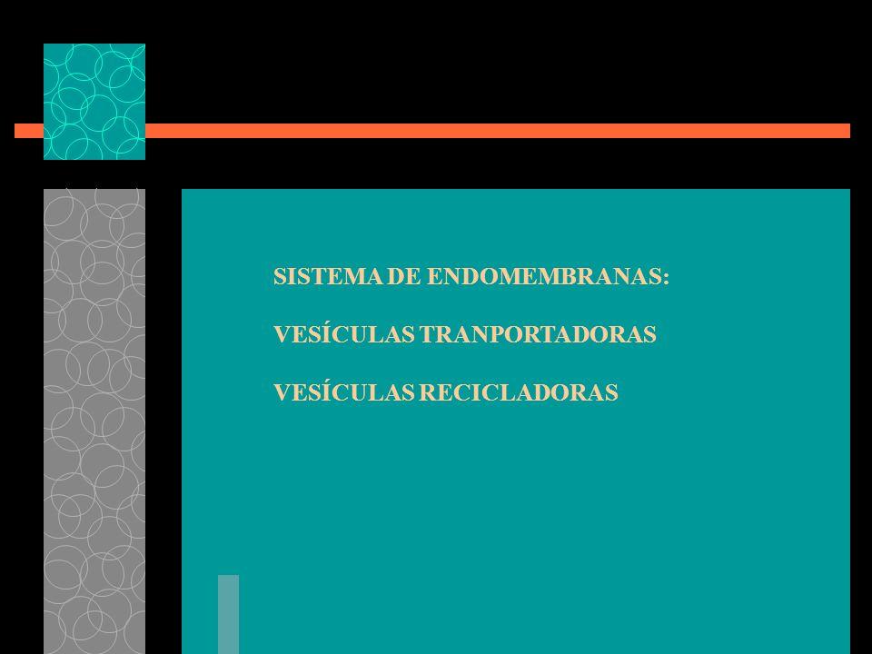 SISTEMA DE ENDOMEMBRANAS: VESÍCULAS TRANPORTADORAS VESÍCULAS RECICLADORAS