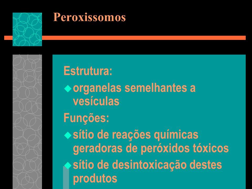 Peroxissomos Estrutura: organelas semelhantes a vesículas Funções: sítio de reações químicas geradoras de peróxidos tóxicos sítio de desintoxicação de