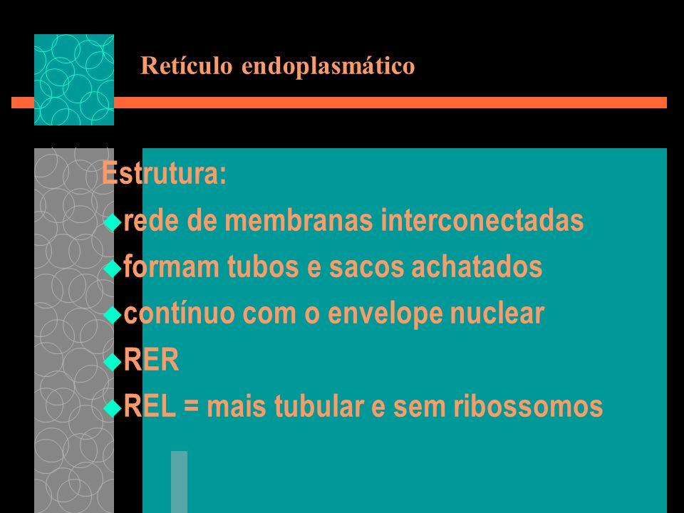 Retículo endoplasmático Estrutura: rede de membranas interconectadas formam tubos e sacos achatados contínuo com o envelope nuclear RER REL = mais tub