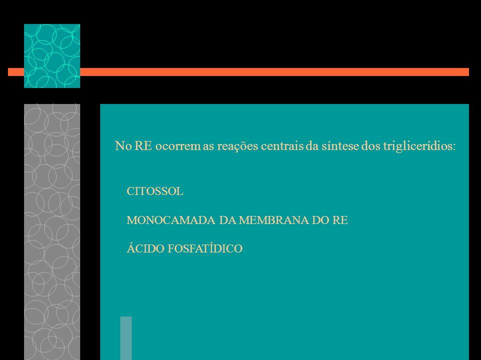 No RE ocorrem as reações centrais da síntese dos triglicerídios: CITOSSOL MONOCAMADA DA MEMBRANA DO RE ÁCIDO FOSFATÍDICO