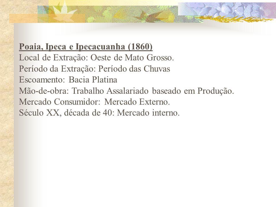 Poaia, Ipeca e Ipecacuanha (1860) Local de Extração: Oeste de Mato Grosso. Período da Extração: Período das Chuvas Escoamento: Bacia Platina Mão-de-ob