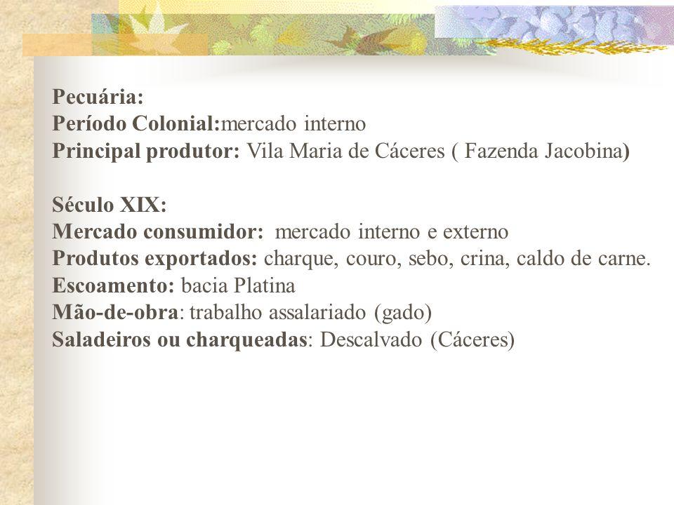 Pecuária: Período Colonial:mercado interno Principal produtor: Vila Maria de Cáceres ( Fazenda Jacobina) Século XIX: Mercado consumidor: mercado inter