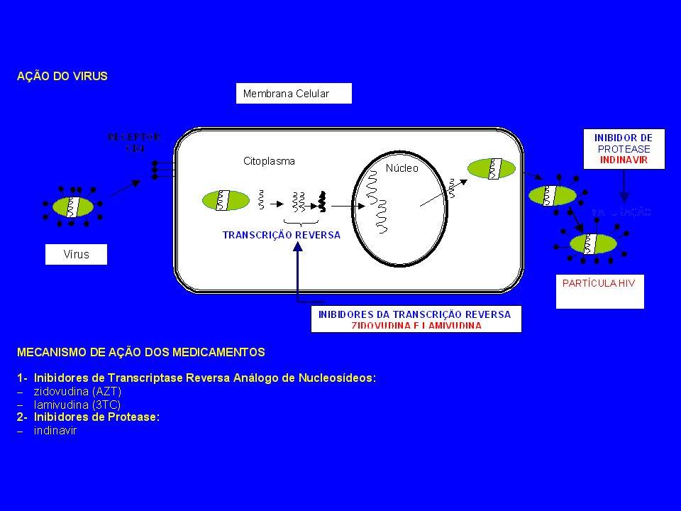 Retrovírus Spumavírus Oncornavírus Lentivírus HIV 2 SIV simm SIV syk HIV 1 SIV cpz SIV agm SIV mnd Visna - Maedi CAEV EIAV BIV FIV Primatas Ungulados