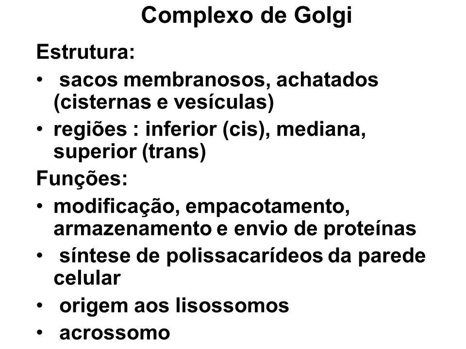 Complexo de Golgi Estrutura: sacos membranosos, achatados (cisternas e vesículas) regiões : inferior (cis), mediana, superior (trans) Funções: modific