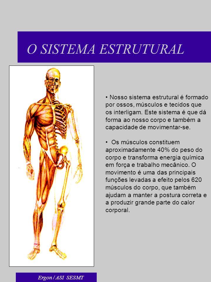 O SISTEMA ESTRUTURAL Nosso sistema estrutural é formado por ossos, músculos e tecidos que os interligam. Este sistema é que dá forma ao nosso corpo e