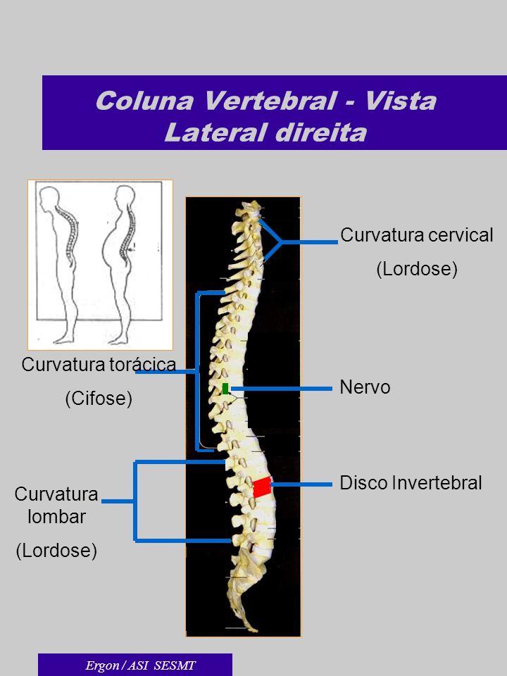 Coluna Vertebral - Vista Lateral direita Disco Invertebral Curvatura torácica (Cifose) Curvatura cervical (Lordose) Curvatura lombar (Lordose) Nervo E