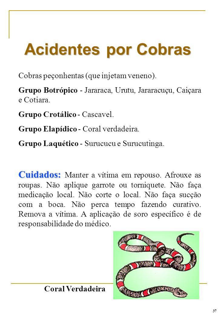Cobras peçonhentas (que injetam veneno). Grupo Botrópico - Jararaca, Urutu, Jararacuçu, Caiçara e Cotiara. Grupo Crotálico - Cascavel. Grupo Elapídico