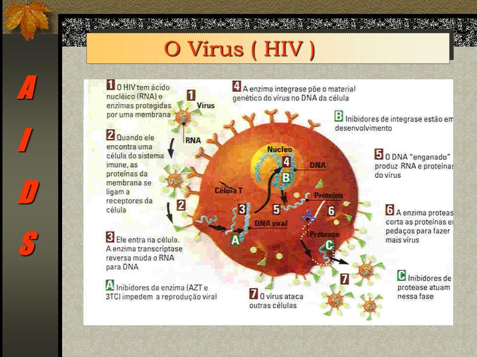 AIDS O Vírus ( HIV )