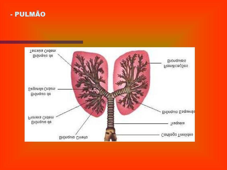 1) INTRODUÇÃO 2) DEFINIÇÃO 3) CATEGORIAS DE EDEMAS E SUAS ETIOLOGIAS 4) REVISÃO ANATÔMICA: CORAÇÃO E PULMÃO - CORAÇÃO 1 - Coronária Direita 2 - Coroná