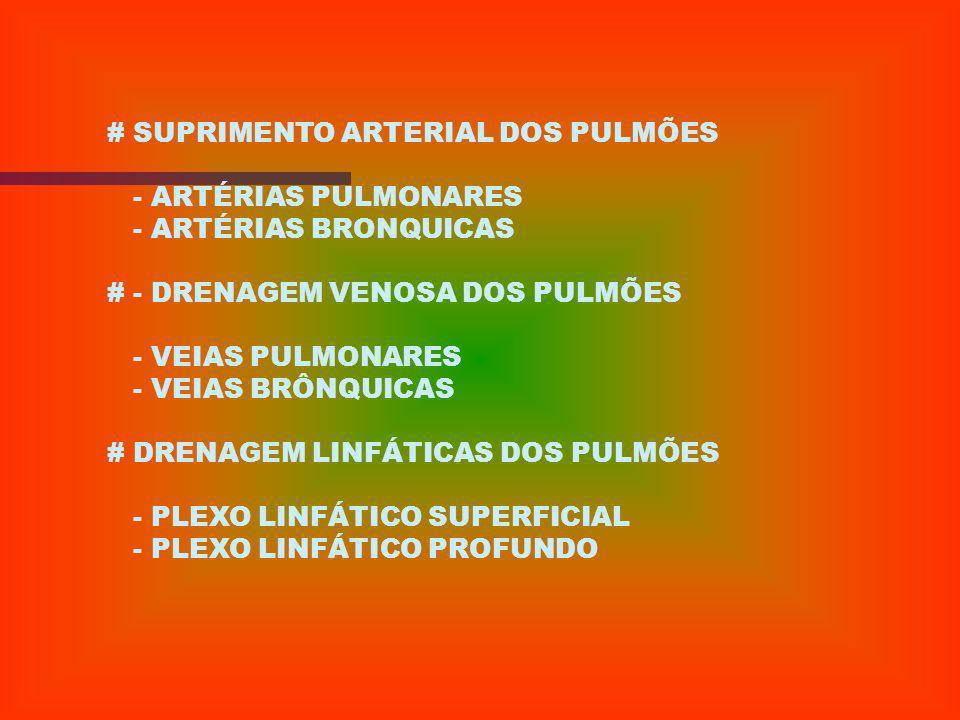 - PULMÃO
